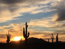 Sunset Sentries, Saguaro Sentinelles, Grandmother Cactus Royalty Free Stock Images