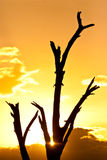 Sunset in the serengeti. With beautiful colors Royalty Free Stock Photo