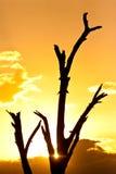 Sunset in the serengeti Royalty Free Stock Photo
