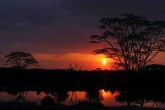 Sunset in Serengeti Stock Photo