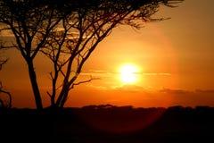 Sunset at Serengeti Stock Photography