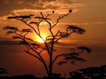 Sunset in the Serengeti Stock Image