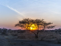 Sunset in the serengeti national park Royalty Free Stock Photo