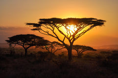 Sunset. In the Serengeti reserve Royalty Free Stock Photography