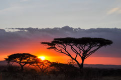 Sunset. In the Serengeti reserve Stock Image