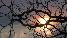 Reflection of sunset in the water. Sunset in the shore of a lake with some old branches floating in it, shadow reflection of an old tree half drowned in the lake stock video footage