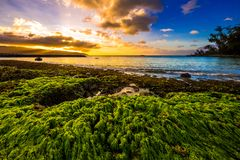 North Shore Hawaii Sunset. Sunset on the shores of the Pacific Ocean on Oahu`s North Shore in Hawaii stock photos