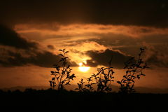 Sunset silhouette of Royalty Free Stock Photo
