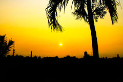 Sunset Silhouette. In urban with coconut tree Stock Image