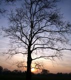 Sunset silhouette. Tree silhouette, Hyde Park Royalty Free Stock Images