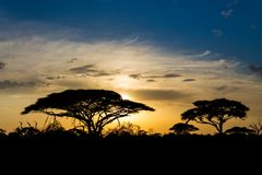 Sunset silhouette of african acacia trees in savanna bush. Wild safari scenic landscapes of Africa Stock Photo