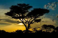 Sunset silhouette of african acacia trees in savanna bush. Wild safari scenic landscapes of Africa Royalty Free Stock Images
