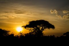 Sunset silhouette of african acacia trees in savanna bush. Wild safari scenic landscapes of Africa Stock Image