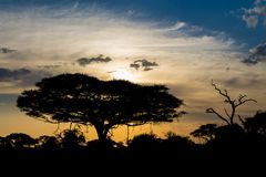 Sunset silhouette of african acacia trees in savanna bush. Wild safari scenic landscapes of Africa Royalty Free Stock Photos