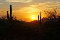 Sunset silhouette in the Arizona desert with Saguaro cacti. Sunset silhouette view of the Arizona desert with Saguaro cacti and mountains Royalty Free Stock Photos