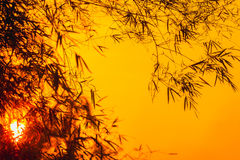 Sunset with a silhouette of bamboo leaves Royalty Free Stock Photo