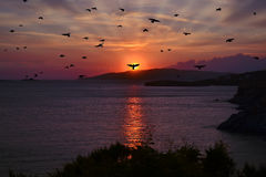 Sunset with silhouette birds flying Royalty Free Stock Image