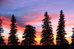 Sunset Silhouette, Brandon, Manitoba. A line of evergreen trees, running along 18th street in Brandon, Manitoba, Canada as the prairie sun sets in the distance royalty free stock image