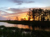 Sunset silhouette in the cypress swamp Stock Photography