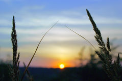 Sunset with silhouette of grass against sky stock photo