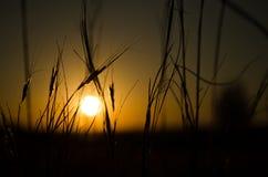 Sunset. Silhouette of a sunset over african savannah grasslands Stock Photography
