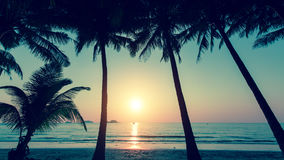 Sunset and silhouette of palm trees on the beach. Nature. Royalty Free Stock Photos
