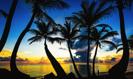 Sunset silhouette of palm trees Royalty Free Stock Photography