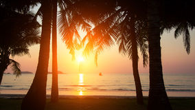 Sunset and silhouette of palm trees on the sea beach. Nature. Sunset and silhouette of palm trees on the sea beach Stock Photography