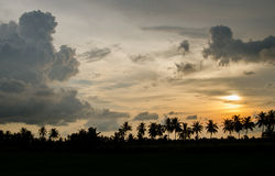 Sunset Silhouette. Rows of silhouetted palm trees in the sunset Stock Photos