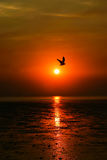 Sunset Silhouette of sea and sea gull Stock Photography