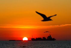 Sunset and Silhouette seagull. Silhouette of seagull flying on the boat. in Thailand Royalty Free Stock Image