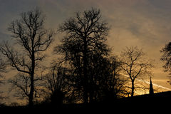 Sunset Silhouette. Studle Royal Ripon Yorkshire UK royalty free stock photo