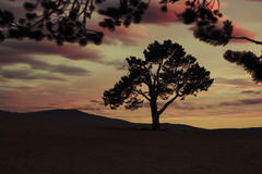 Sunset with silhouette tree Royalty Free Stock Image