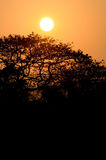 Sunset with silhouette tree Stock Images