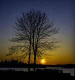 Sunset. Silhouette of a tree at sunset Stock Images
