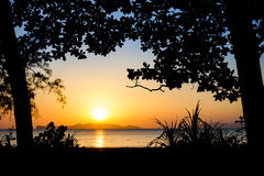 Sunset silhouette1. Silhouette tree and sunset on the beach Stock Photos