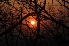 Sunset Silhouette Tree Royalty Free Stock Photos