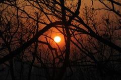 Sunset Silhouette Tree Royalty Free Stock Photos