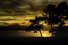 Sunset with silhouette trees on hilltop Royalty Free Stock Image