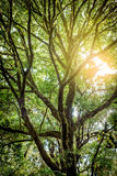 Sunset through Silhouette Under the shade of tall trees branch i Stock Images