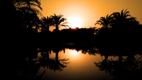 Sunset and Silhouetted Palm Trees Reflected in the Water Royalty Free Stock Image