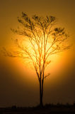 Sunset with silhouetted tree Stock Photos