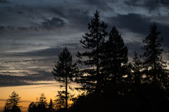 Sunset with Silhouetted Trees Royalty Free Stock Image