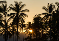 Sunset and silhouettes. Palm trees silhouettes on sunset background Stock Photos