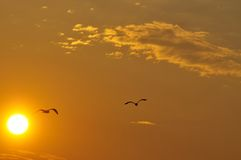 Sunset with silhouettes of seagulls Stock Images