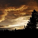 Sunset, Silhouettes, Tree, Horizon Royalty Free Stock Photo