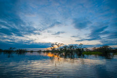Sunset silhouetting a flooded jungle in Laguna Grande, in the Cuyabeno Wildlife Reserve, Amazon Basin, Ecuador Royalty Free Stock Photo
