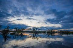 Sunset silhouetting a flooded jungle in Laguna Grande, in the Cuyabeno Wildlife Reserve, Amazon Basin, Ecuador Stock Image