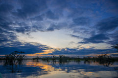 Sunset silhouetting a flooded jungle in Laguna Grande, in the Cuyabeno Wildlife Reserve, Amazon Basin, Ecuador Stock Images