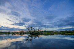 Sunset silhouetting a flooded jungle in Laguna Grande, in the Cuyabeno Wildlife Reserve, Amazon Basin, Ecuador Stock Photography